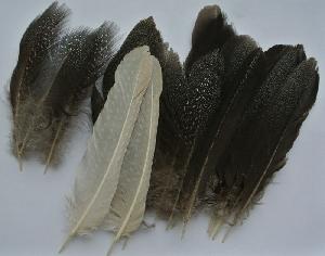 fotografia Perličie perie