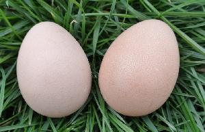 Perličie vajcia